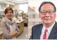 華人科學家發明3D打印幹細胞心臟「補丁」,可與天然心臟融為一體|奇點猛科技