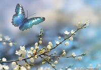 小屋對聯: 蝶羽翩躚春色種 ,邀對下聯