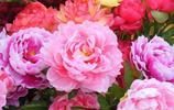 這些絕對家裡養花的不二之選,好看又好養的盆栽,美觀又清新空氣
