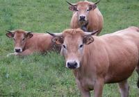 魚和胸罩不可兼得:牛牛4月告別平平淡淡,以後生活指日可待!
