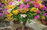 來到花卉市場,看好了這4種花卉,買回家媽媽說值了這錢