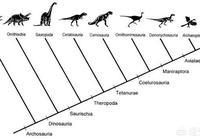 恐龍在地球上生活了1.6億年,樣子沒怎麼改變,為什麼人類的變化這麼大?