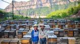 """父子倆的""""放蜂路"""":帶600萬隻蜂走遍半個中國,4平米帳篷就是家"""