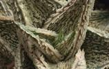 蘆薈也可以這麼美!一起欣賞神奇的園藝蘆薈