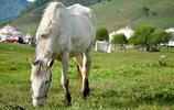 陝西自己的草原——關山牧場,策馬奔騰,仰望星空