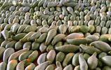放在超市角落,多數人沒吃過!這幾款食物,卻是真正農家天然美食