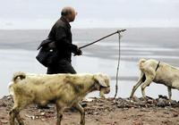 一個五年養羊人的養羊經歷