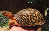 烏龜烏龜烏龜