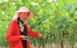 農村小夥子放棄10萬年薪,回到農村種植10畝葡萄樹,值得借鑑嗎?