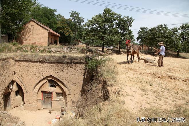 河南農村1個76歲老人的夏收,看看他的生活成啥樣