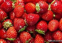 食材篇:草莓11種驚人的健康益處,你知道嗎?