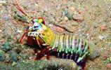 據說是二郎神的後代——三眼甲蟲