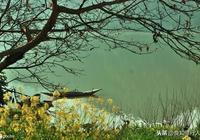 詩詞品讀|韋應物:滁州西澗(野渡無人舟自橫)