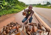 非洲人家最喜歡吃蝸牛,蝸牛湯5元一碗