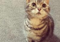 """日本小姐姐養了一隻自帶臥蠶的小貓,連喝個水都那麼可愛,把網友萌到老淚縱橫:""""貓會有的,貓糧也會有的""""…"""