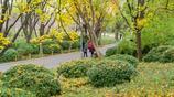 初冬的濟南泉城公園,五彩斑斕宛如童話世界
