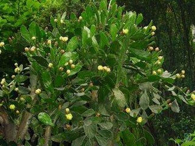 植物圖集:仙人掌植物美圖