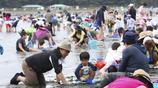 日本橫濱海灘旅遊旺季開始 遊客支起帳篷挖蛤蜊