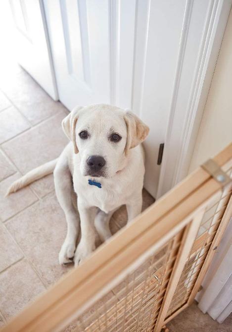 再次提醒:這樣懲罰狗狗,它不但不會改,還會記恨你一輩子!