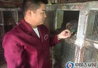 合作社裡養鼠人——記泰和縣綠健達竹鼠養殖專業合作社理事長劉崇輝