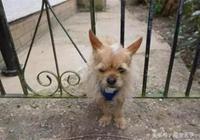 小狗追貓被卡在柵欄上,貓咪在不遠處淡定的看它出糗!