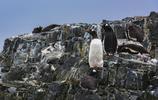 南極的半島