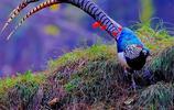 你見過頭上長藍色角的鳥嗎?一起來看看大瓦山溼地公園鳥類集吧!