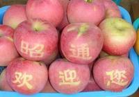 昭通蘋果——耀眼的後起之秀
