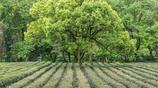 杭州西湖已擠成一鍋粥,最美的春天私藏在這裡