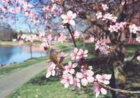 熱門話題|醉美人間三月天,正是賞花好時節