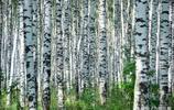 林間生機勃勃的樹木