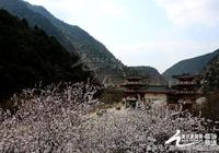 山西霍山七裡峪 山桃花與白雪同在
