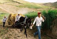 未來5年,農村這3個小生意很不錯,只要不偷懶,照樣可以月入過萬