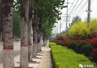 單縣道路綠化