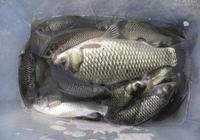 防止和大魚拔河的控魚和誘魚技巧,非常實用
