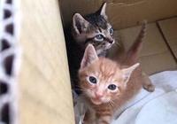 兩隻小奶貓被救後,兩隻小貓摟在一起互相安慰,哥哥:不要怕