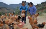 50歲男子攜3個外甥女留守大山,孩子每天與大山相望、雞鴨為伴