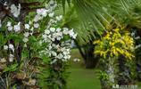 中國最大戶外蘭花園,有50餘萬株蘭花,是新加坡國家蘭花園的7倍