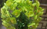 花卉圖集:這些花的名字,你都能叫上來,可以開花店了!