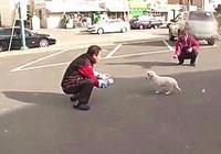 狗狗吃醋後選擇離家出走,冒充流浪狗尋找愛它的主人,像極了愛情