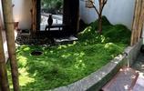 苔蘚庭院,綠的海洋