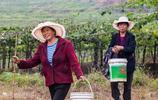 你認識這是什麼果實嗎?山村殘疾漢靠它致富,創辦合作社福滿鄉鄰