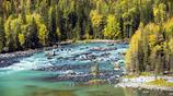 自然風光圖集欣賞:新疆喀納斯臥龍灣風景