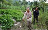 深山裡老夫妻喝山泉吃野菜養豬種地,相依相伴53年,一輩沒紅過臉