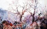 王輝林畫家《水彩抒情寫意 追尋美的寧靜》