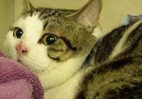 病重小貓被主人扔在醫院,卻跟醫生相伴10年,病好後還救了6只貓