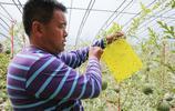 山東農民大叔5年前建大棚種植富硒西瓜,如今年盈利50萬元以上