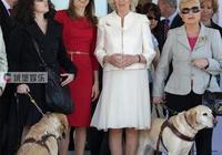 71歲卡米拉越來越會穿,白色紗裙配小西裝,不輸46歲西班牙王后!