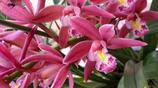 秋冬季節匆匆到來,想在室內養開花的植物,這些必須是你的首選