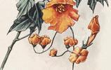 陶冷月 · 花卉寫生